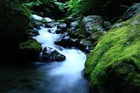 苔むす渓流 - 小さな森の写真館 (a small forest story)