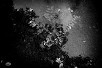 雨の足跡 - Yoshi-A の写真の楽しみ