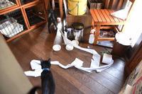 めざせ黒猫マスターへの道 その11 白と黒の惨劇 - りきの毎日