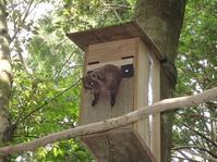 ムササビ 巣箱 7月中旬 - おらんくの自然満喫