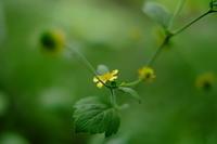 野草を探しに森へ - ルンコたんとワタシの心模様