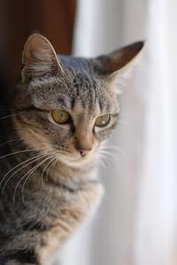 窓辺の小梅 - Black Cat Moan