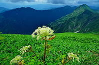 天空に咲く花 Ⅱ - 風の香に誘われて 風景のふぉと缶