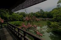 京都御所~拾翠亭の百日紅 - 鏡花水月