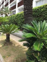 秋の気配は、小さな木陰から - パームツリー越しにgood morning        アロマであなたの今に寄り添うブログ