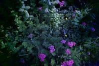 海辺の町の花 - Sorekara・・・