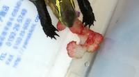 セマルハコガメ、イチゴを食う - 自由なB型でごめんなさい