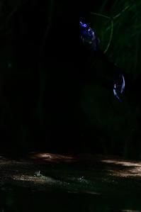 blue eye and tail - サンヨン片手に自然散策