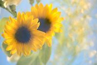 花束撮影 - 想い出
