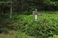 20170809 【登山】遊歩会の定例山行で北八ヶ岳へ - 杉本敏宏のつれづれなるままに