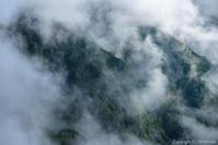 霧の森 - ひつじ雲日記