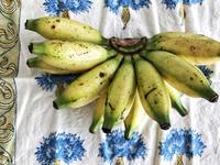 バナナと洋ナシ - 日日是好日 in Singapore