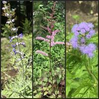 現在の庭の花 - 森の扉