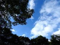 暑い日はルオムの森でのんびり涼みませんか? - 北軽井沢スウィートグラス