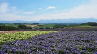 北海道旅行2017年7月⑥四季彩の丘@美瑛、ファーム富田、フラワーランドかみふらの@富良野 - エリンゲル日記