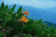 山のニッコウキスゲ - 風の香に誘われて 風景のふぉと缶