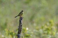 お山で写した鳥さん~ - takiのカメラ散歩~☆