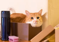 ポコちゃん - 猫と夕焼け