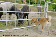 お馬さんたち - ♪バニデビーグルデイ + 赤柴の ほとり