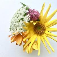 Backyard Flowers - 烏帽子への風