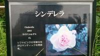 バラのプリンセス - parfumlabo