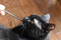 めざせ黒猫マスターへの道 その13 記念写真 - りきの毎日