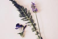 """スキンケアの為のハーブと精油 - 英国メディカルハーバリスト&アロマセラピストのブログ""""Herbal Healing 別館"""""""