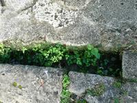 旅の思い出・・・その2沖縄編 - hibariの巣