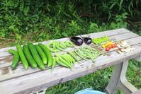 お盆休みが始まりました。 - 週刊「目指せ自然農で自給自足」