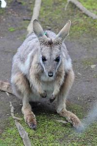 4月のシマオ一家 - 続々・動物園ありマス。