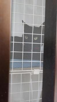 ねこ歩き - 黒猫瓦版