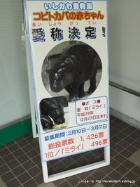 いしかわ動物園のコビトカバ ミライちゃん再訪(生後231日目) - こらくふぁーむ