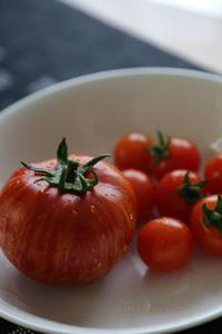 家庭菜園 - TAMAの卵