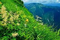谷川岳 夏の花 - 風の香に誘われて 風景のふぉと缶