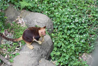 モアラくん危機一髪 - 今日ものんびり動物園