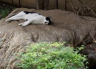 最近の猫事情33 - 鳥会えず猫生活