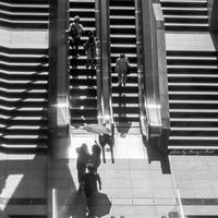 Stairs - Berry's Bird