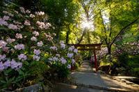 石楠花咲く岡寺(前編) - 花景色-K.W.C. PhotoBlog