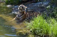 暑い日が続きました。 - 動物園へ行こう