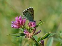 草原の風に翔ぶ蝶を追って(その12) - 不思議の森の迷い人