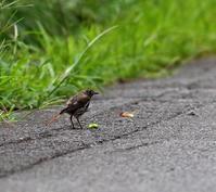 八ヶ岳付近(その3)・・・ - 一期一会の野鳥たち