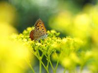 8月の野草園から~②虫の姿など - 柳に雪折れなし!Ⅱ