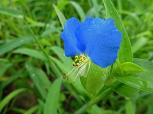 小さな野の花 -