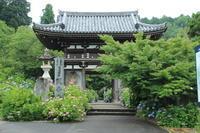 雨上がりの紫陽花@福知山観音寺 - ◆ キョウモドコカデチドリアシ ◆