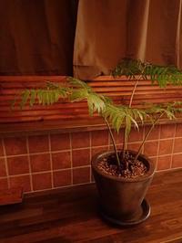 グリーンコーディネート - 暮らしと植物のブログ