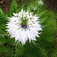 庭の様子&庭の異変と被害 - Homely
