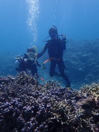 ウミガメ体験ダイビング - ブルちゃんのログ