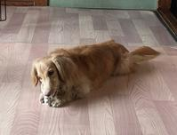 朝から - きょうのはなwithくるみ~愛犬写真日記~