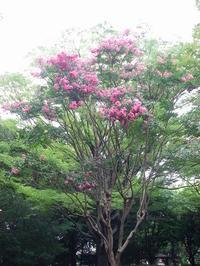 今日の収穫 - 埼玉の空より