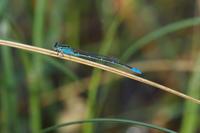 北国ならでは - 蝶と蜻蛉の撮影日記